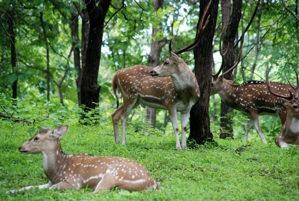 Satmalia Deer Sanctuary forest view