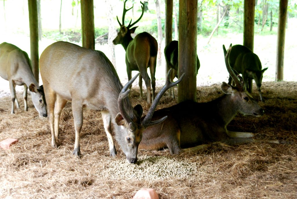 Satmalia Deer Sanctuary vew eating