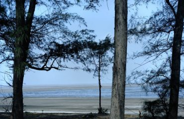 Jampore Beach tree view